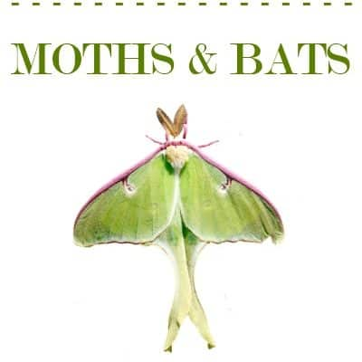 Homeschool Freebies – Moths and Bats