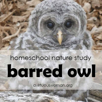 The Barred Owl Nature Study @ AVirtuousWoman.org