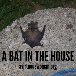A Bat in the House and Other Nature Stories @ AVirtuousWoman.org #naturestudy