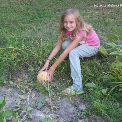 Laura's Garden 2011