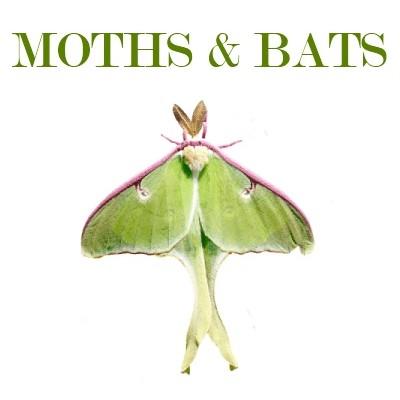 Homeschool Freebies: Moths and Bats @ AVirtuousWoman.org #homeschool