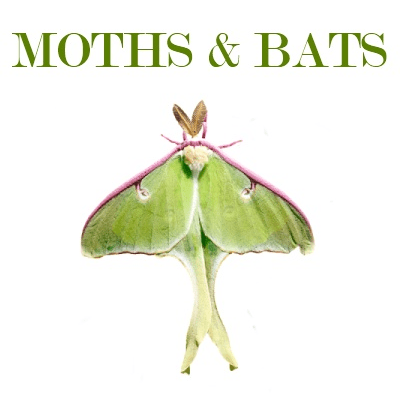 Homeschool Freebies: Moths and Bats @ AVirtuousWoman.org #homeschool