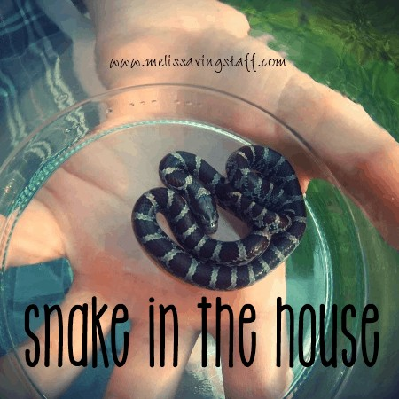 A Snake in the House @ AVirtuousWoman.org #homeschool