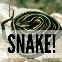 """Homeschooling: I have four girls and when one of them yells, """"Mom! I found a snake!"""" you'd think... @ AVirtuousWoman.org #naturestudy"""