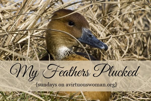 {Sundays} My Feathers Plucked Blog Hop #1 and Book Giveaway