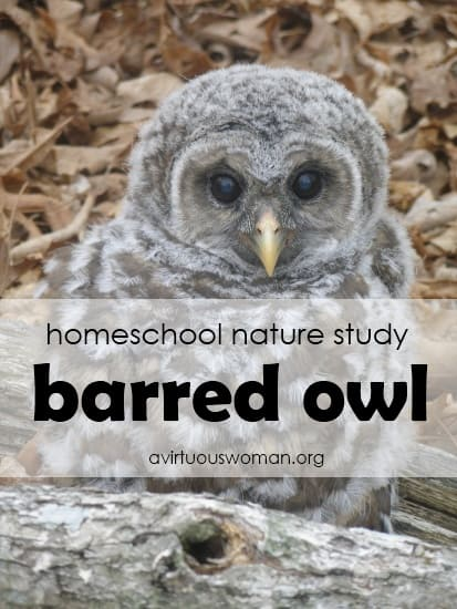 Homeschool Nature Study - the Barred Owl | A Virtuous Woman