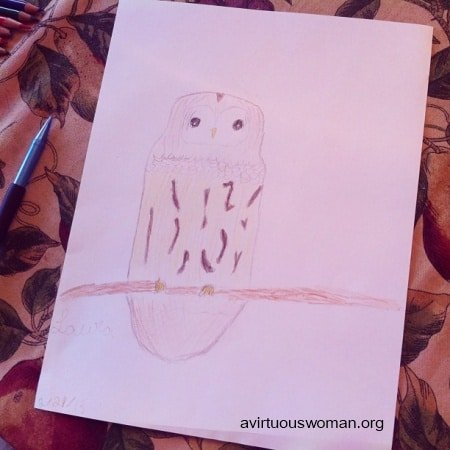 Barred Owl Nature Study | A Virtuous Woman