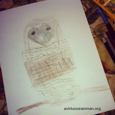 barred owl_hannah