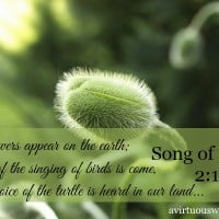 The flowers appear on the earth; the time of the singing of birds is come, and the voice of the turtle is heard in our land... Song of Solomon 2:12 | A Virtuous Woman