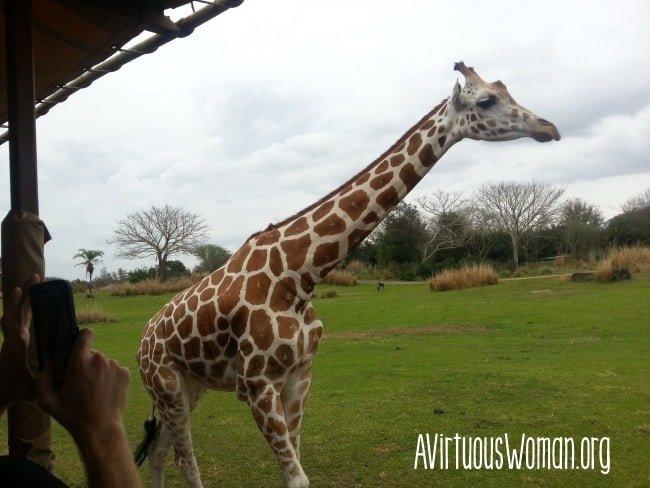 At the Animal Kingdom @ AVirtuousWoman.org #disney