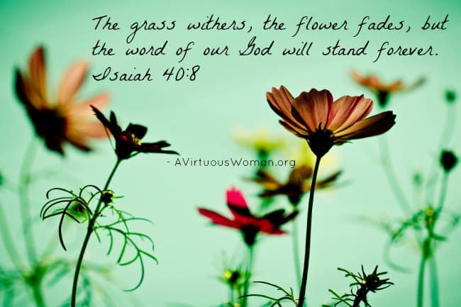 The grass withers, the flower fades, but the word of our God will stand forever. Isaiah 40:8 @ AVirtuousWoman.org