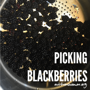 Video: Picking Blackberries