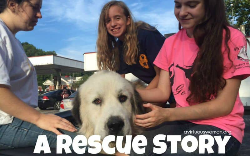 A Rescue Story @ AVirtuosWoman.org