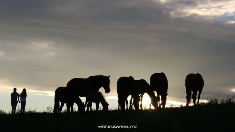 Wild Horses of Harlan County