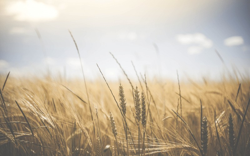 Finding Contentment in Christ | 5 Keys to Being Content