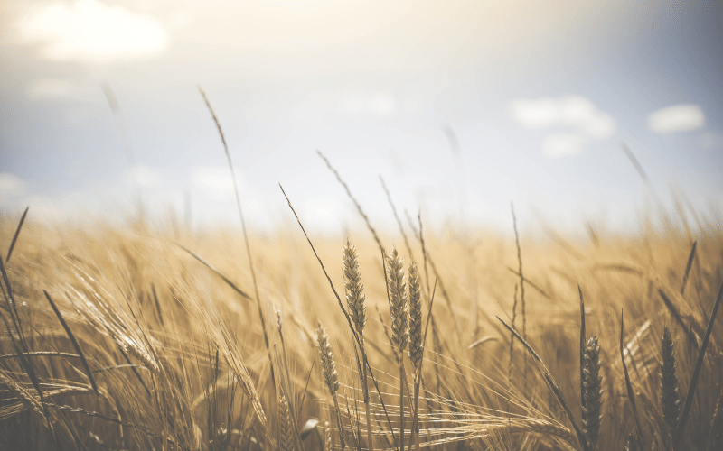 Finding Contentment in Christ   5 Keys to Being Content