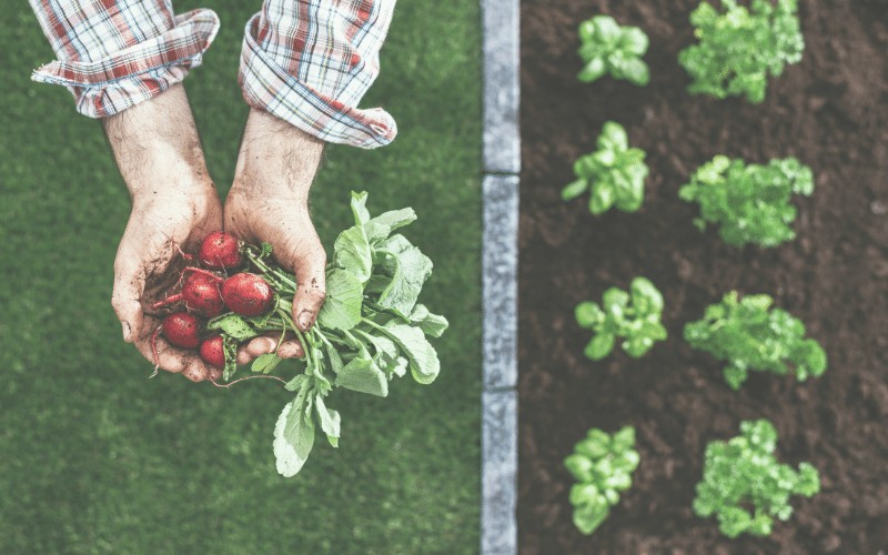 How to Plan Your Square Foot Garden + Free Printable Planner