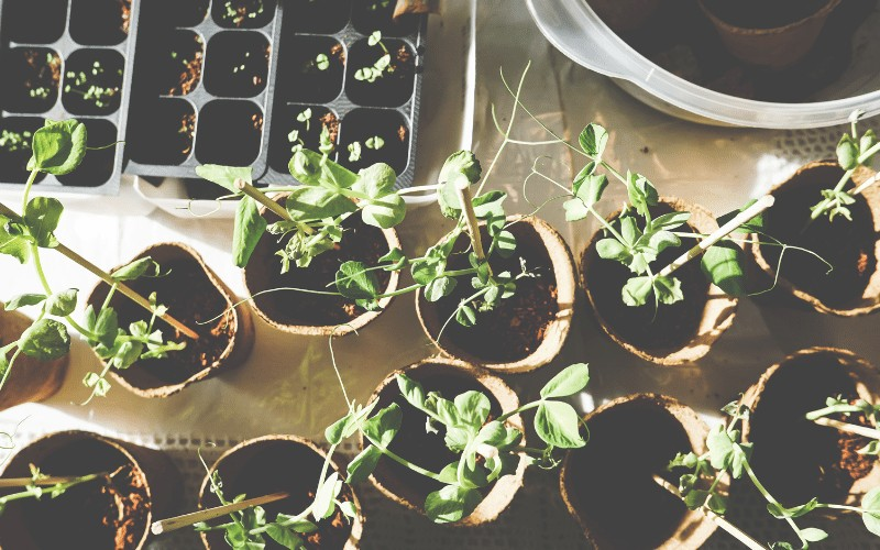 Square Foot Garden Planting Guide | Free Printable