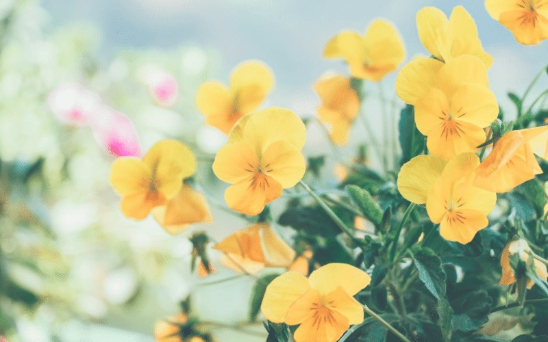 Practicing Gratitude | Gratitude Prayer Journal