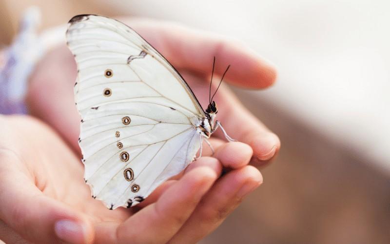 Free Printable Nature Journal | Spring Observations for Kids